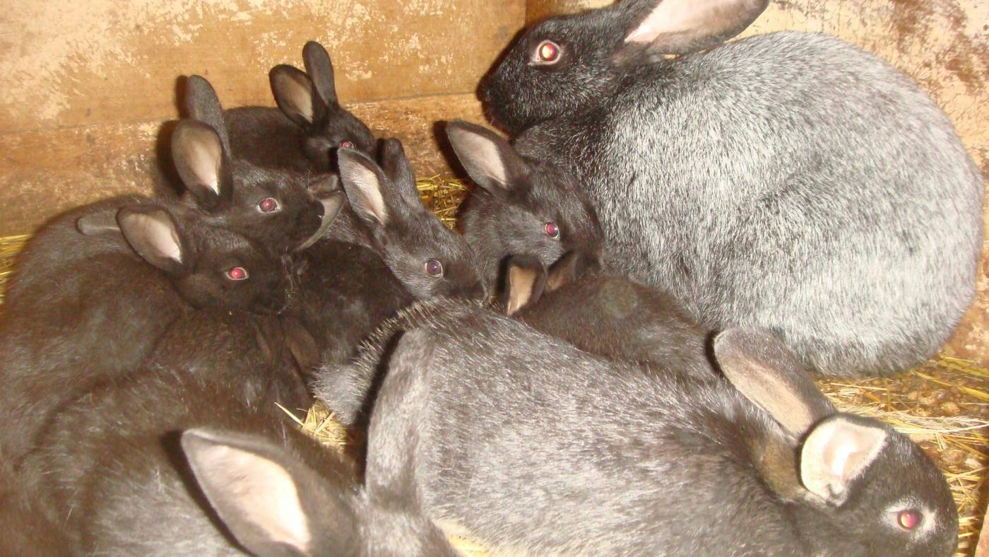 Как спасать кролика от жары: как переносят и могут ли умереть, как охладить