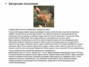 Куры зеленоногой породы — характеристика польских несушек, особенности разведения