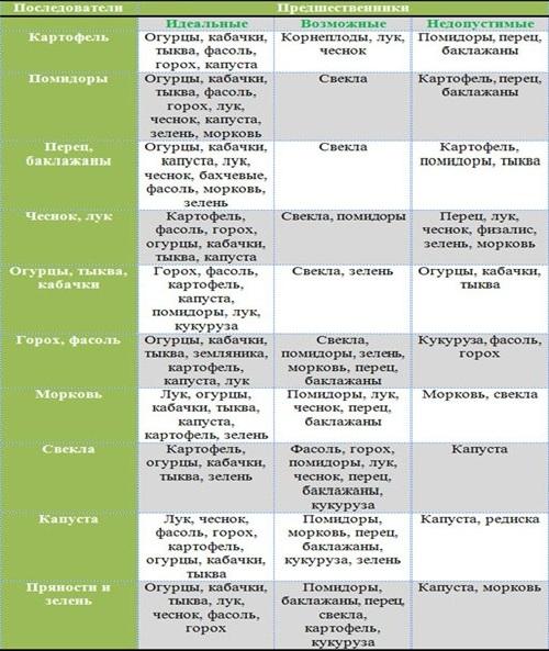 После чего сажать лук: что можно, нельзя, предшественники каких культур лучшие для севооборота озимого овоща и для посадки весной в открытый грунт на следующий год?