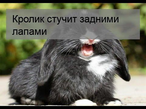 Язык тела кроликов