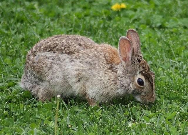 Что и в каких количествах можно давать кролику