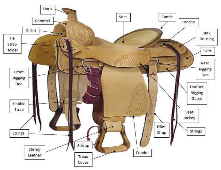 Как оседлать лошадь: этапы седловки, правила
