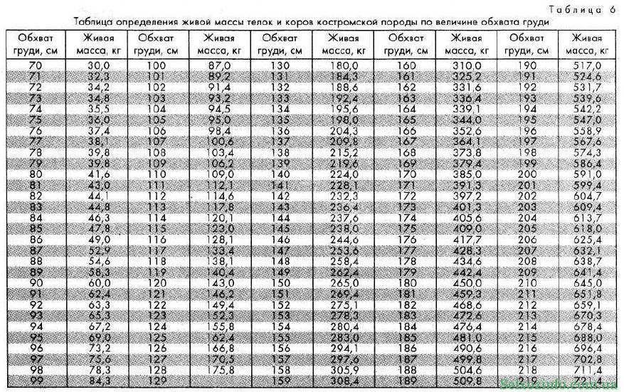 ✅ как узнать вес быка без весов (таблица измерения крс, лента обмера)