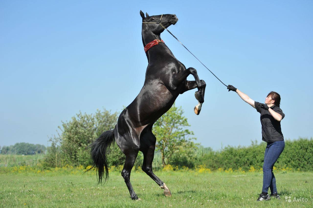 Конь-мерин — все за и против кастрации