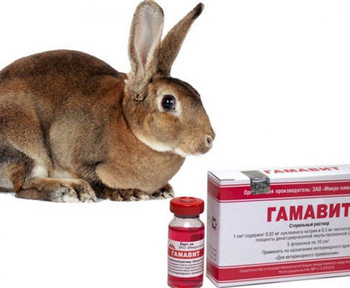 Байкокс для кроликов: описание, инструкция по применению, аналоги