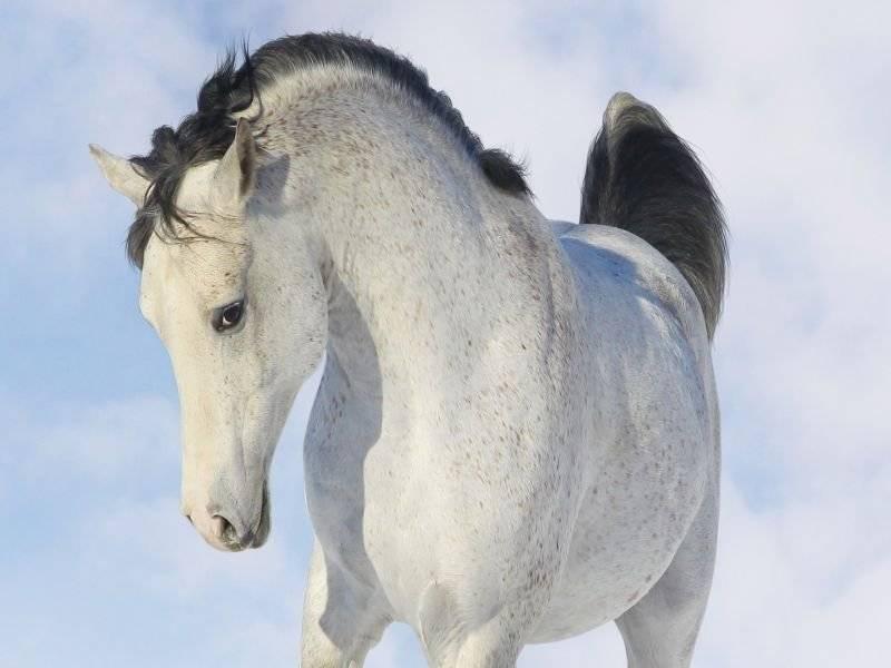 Здоровье лошади, признаки заболевания лошади, температура тела здоровой лошади дыхание пульс выделения из носа, аптечка скорой помощи для лошади, болезни здоровье лошадей