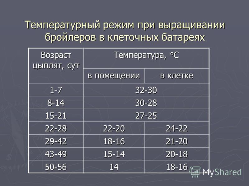 Температурный режим для бройлеров