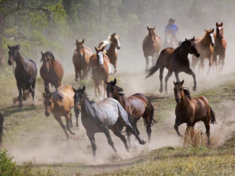 Лошадь в истории человечества. как одомашнивали лошадь