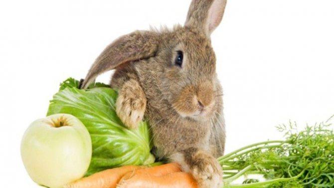 Можно ли кроликам давать кабачки и другие овощные культуры