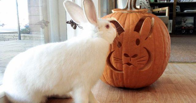 Можно ли давать кроликам пекинскую, белокочанную, цветную и другие виды капусты - гид по огороду