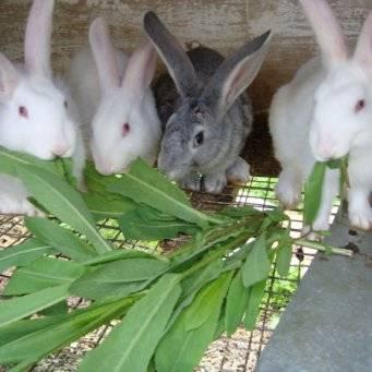 Как выбрать корм для декоративных кроликов?