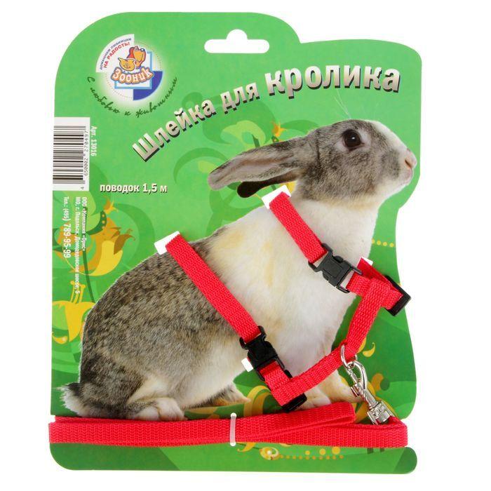 Как правильно надевать поводок на кролика