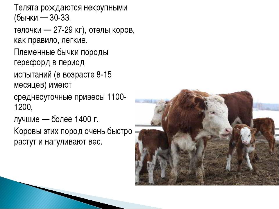 ᐉ сколько нужно сена корове или быку на зиму? - zooon.ru