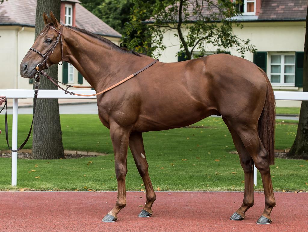 Английская чистокровная лошадь | rusalochka
