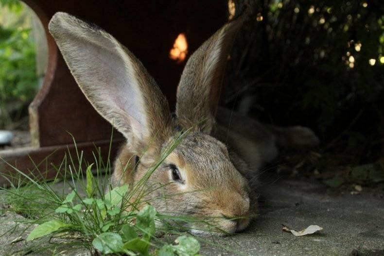 ✅ можно ли кролику давать кабачок: в чем польза и вред, в каком виде скармливать - tehnomir32.ru