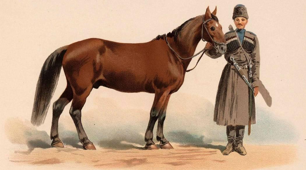 Кабардинская лошадь: фото и описание породы