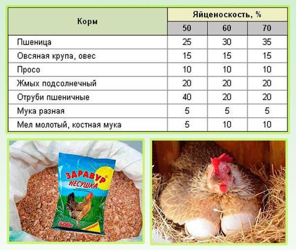 Рацион питания и правила кормления кур на приусадебном участке. чем кормить кур.