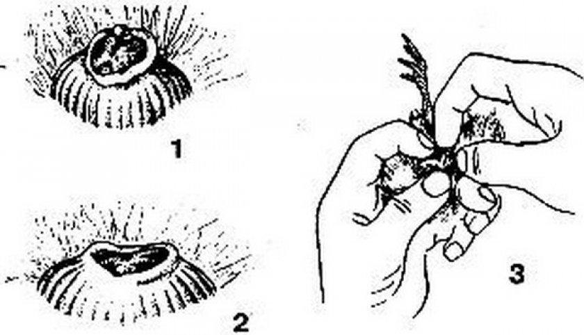 Как отличить гусака от гусыни. как по внешним данным найти гуся в стае птиц. про домашнее пернатое стадо