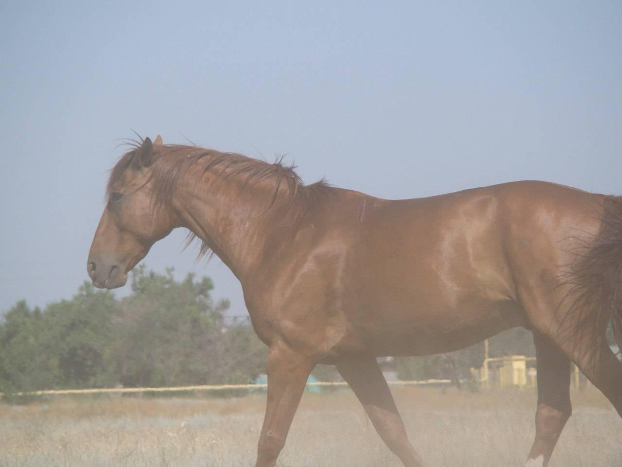 Почему лошадь кусается и как её отучить - агро эксперт