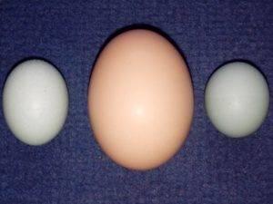 Причины появления у кур необычных яиц, как избежать проблем, видео