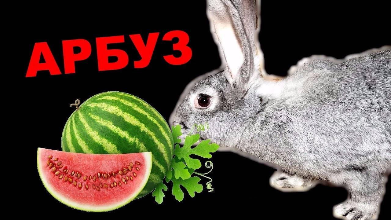 Можно ли кроликам арбузные корки: вся правда о полезном лакомстве | лапа помощи | яндекс дзен