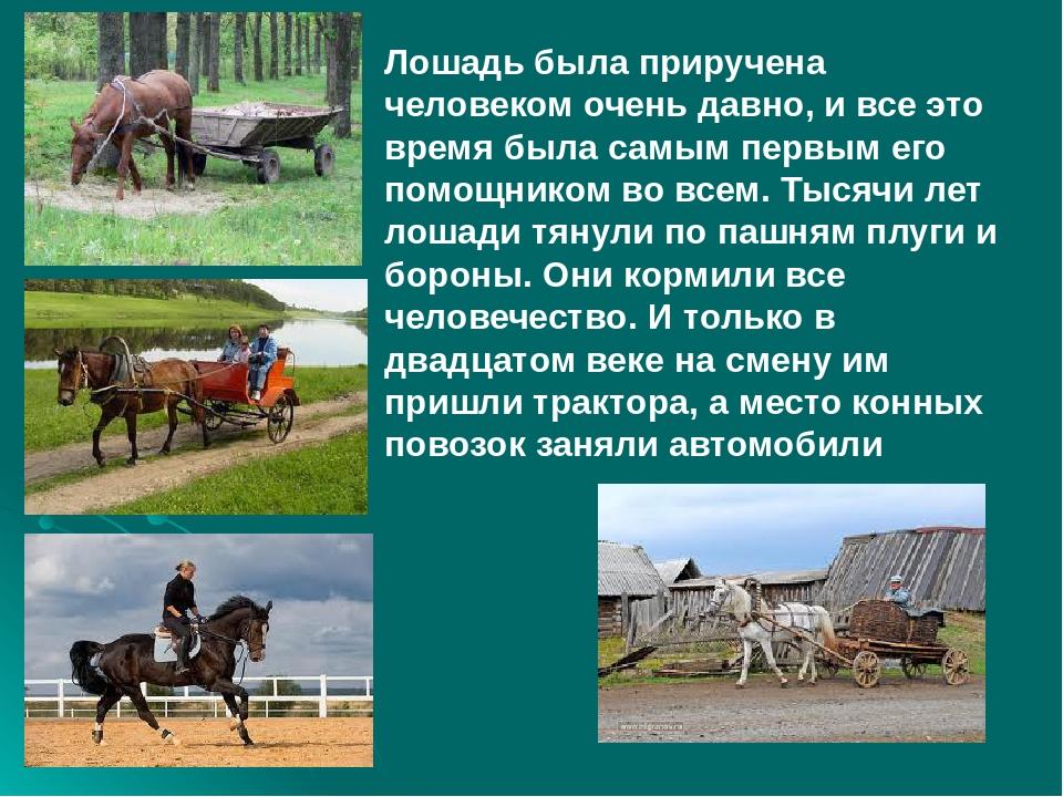 Содержание лошадей - как содержать и кормить лошадей самостоятельно, особенности и выгоды