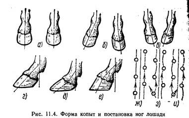 ✅ копыта лошади: анатомия строения и части копыта - какое изнутри с фото - tehnoyug.com
