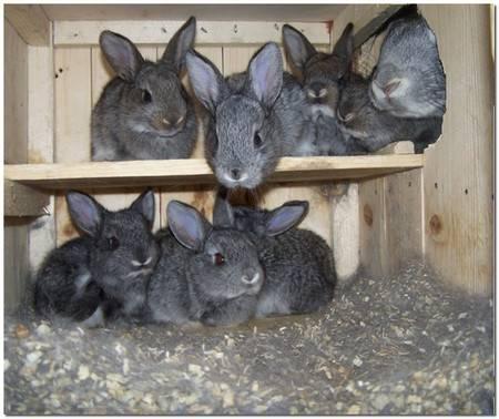 Почему кролик грызёт клетку, что делать и как отучить?