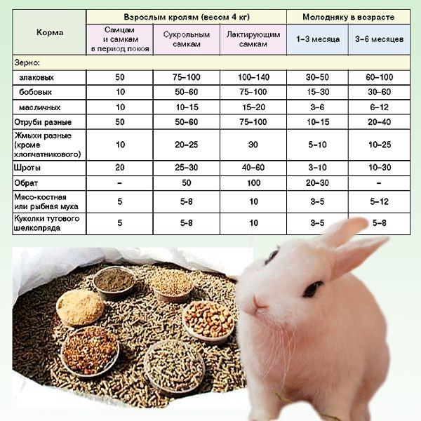 Чем лучше кормить кроликов для быстрого набора веса? - домашние наши друзья