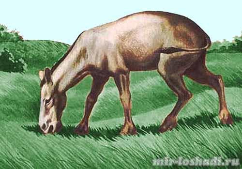 История происхождения лошади: интересные факты   zoodom