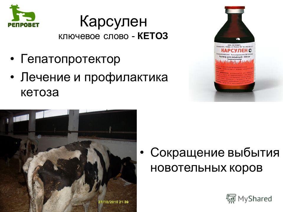 Лептоспироз животных — симптомы и методы лечения крс, коз, овец и других
