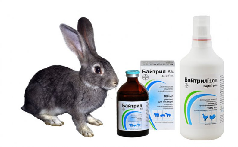 Симптомы заболевания кокцидиоз у кроликов, его лечение и профилактика йодом