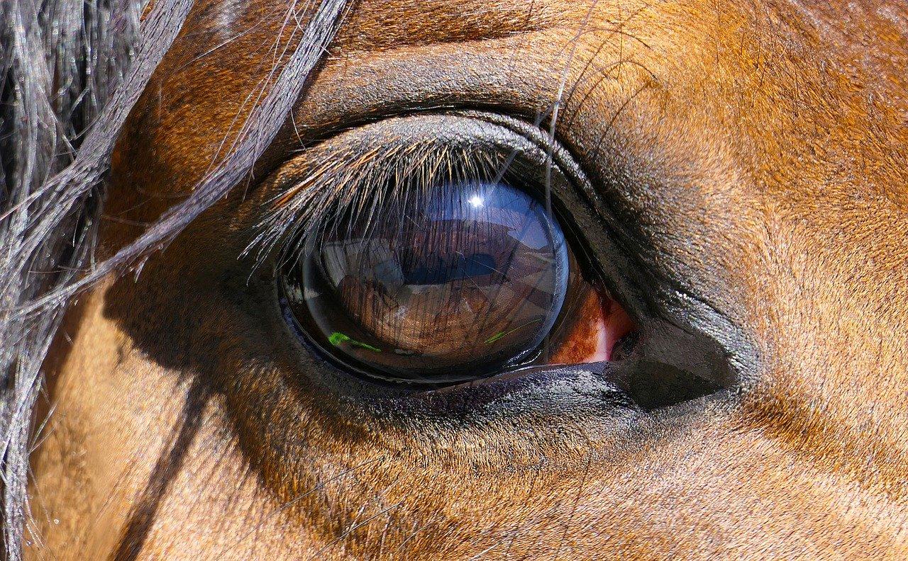 Зачем лошадям закрывают глаза по бокам