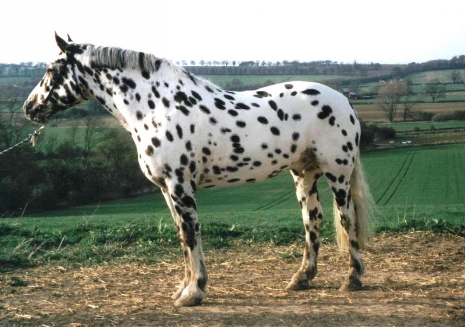 Самые красивые и редкие породы лошадей: топ-5 грациозных красавцев (фото)
