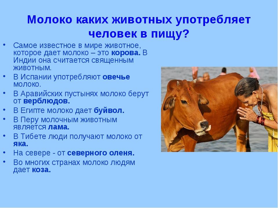 Почему не скисает домашнее коровье молоко: хранение, кипячение