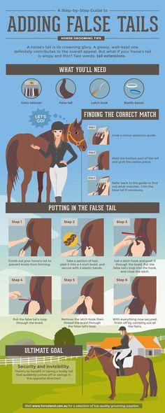 Руководство по правильному уходу за лошадьми