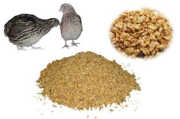 Чем кормить перепелов в домашних условиях на разных этапах выращивания?