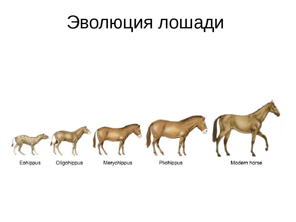 Эволюция лошадей