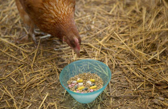 Тилозин 50 для птиц, применение молодняку и взрослой птице