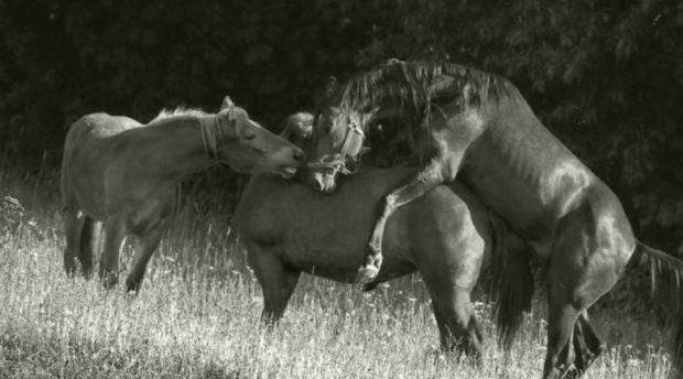 Как разводить лошадей: особенности содержания, методы, какие породы разводят в россии