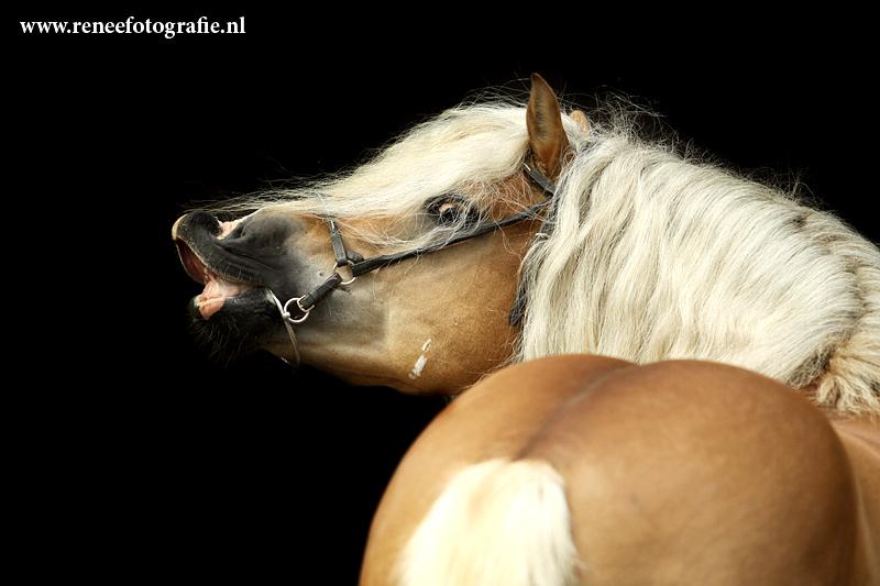 Конь-мерин: все за и против кастрации |