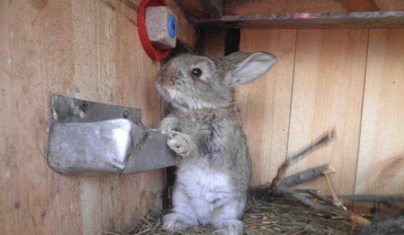 Кролик не ест и не пьет, что делать: причины и профилактика