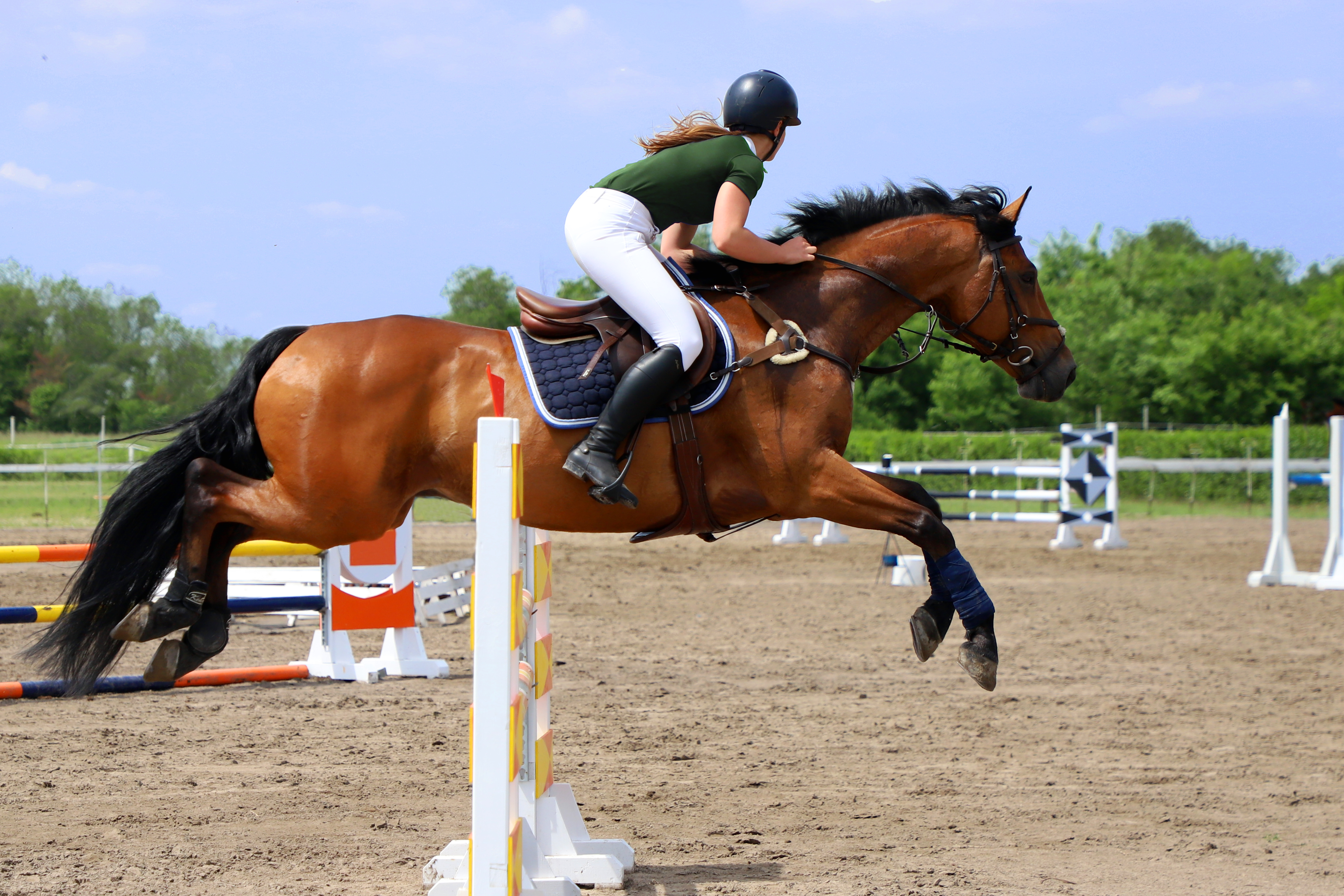 Разновидности скачек на лошадях