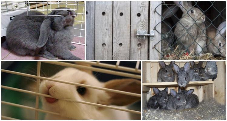 Почему кролики грызут клетки и что с этим делать