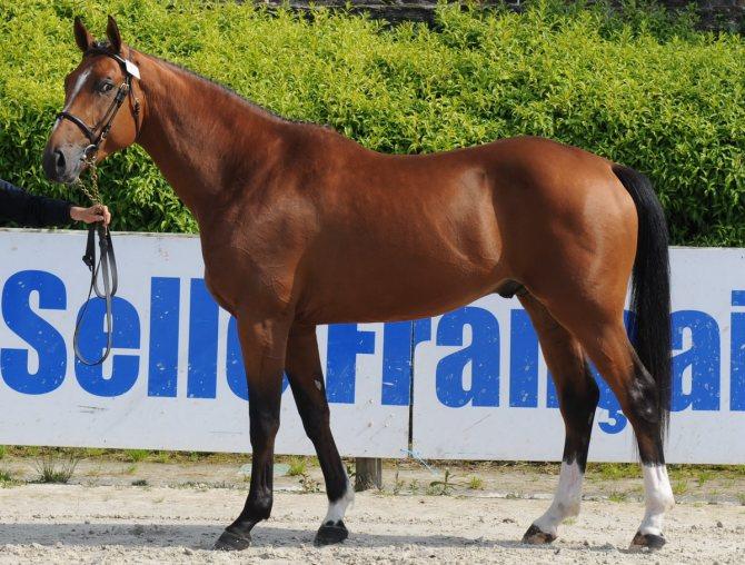 Породы лошадей с фото и описанием | блог анатолия кузнецова
