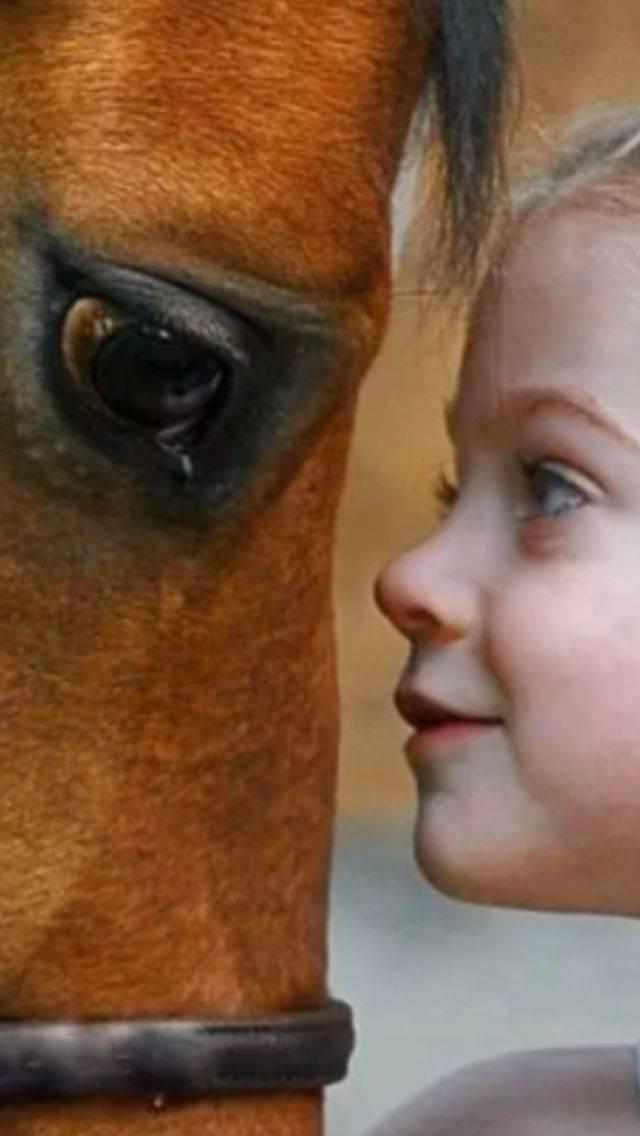 Глаза лошади (голубые, красные, сорочий глаз): накладки, зачем закрывают шорами, строение, особенности зрения, заболевания