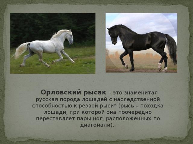 Русский рысак: описание породы лошадей, содержание, фото