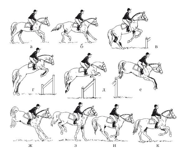 3 бесценных урока в конном спорте. чему нас могут научить лошади?