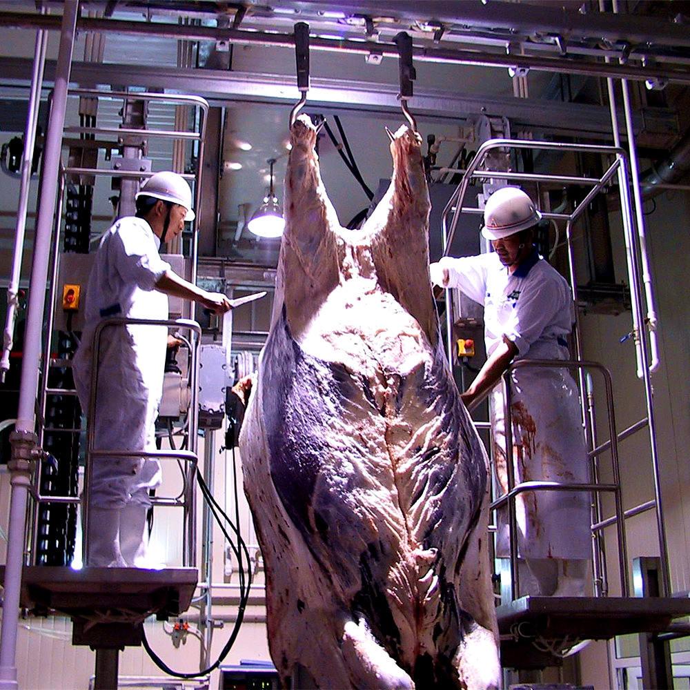 Как происходит забой скота. правила проведения убоя скота в российской федерации