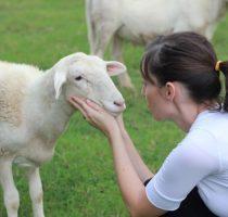 Заразные и незаразные болезни коз